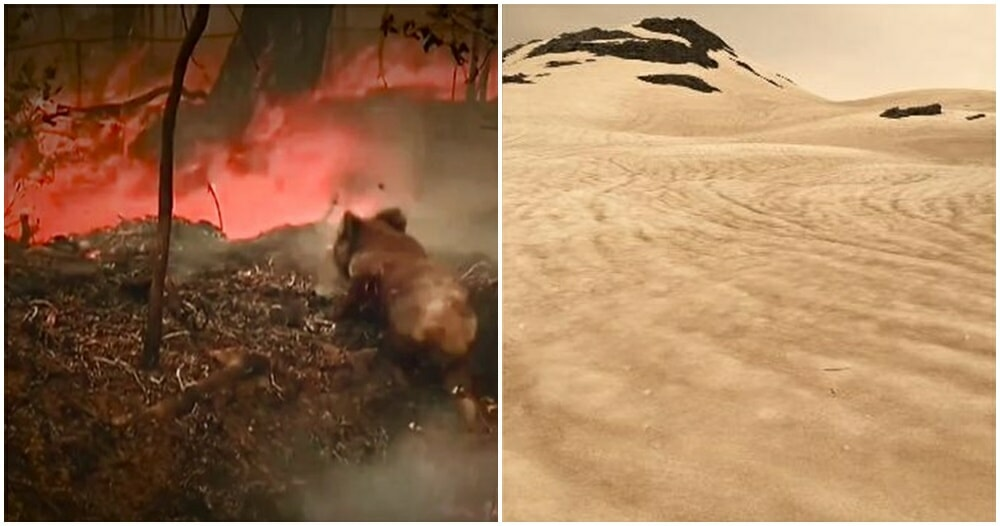 Australia's Fire Crisis Wiped Out Nearly 500 Million Animals, Turning Glaciers Black - WORLD OF BUZZ 3