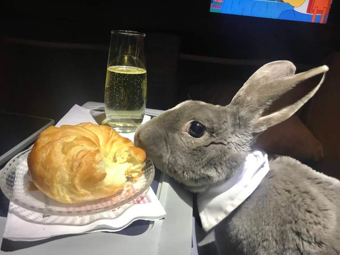 CEO's Cute Rabbit Travels Business Class From USA to Japan, Makes Us All Want Her Life - WORLD OF BUZZ 3