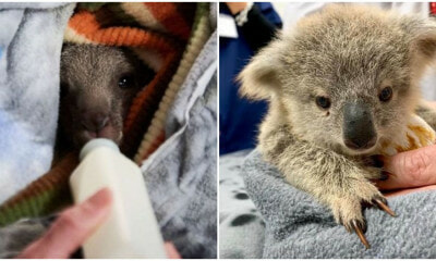 Crafters Worldwide Unite To Make Blankets, Pouches For Injured Baby Koalas and Kangaroos - WORLD OF BUZZ 6