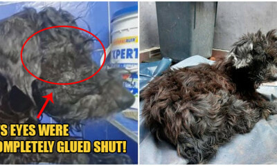 Cruel Owner SUPER GLUES Puppy's Eyes & Abandons It So It Can't Follow Them Home - WORLD OF BUZZ