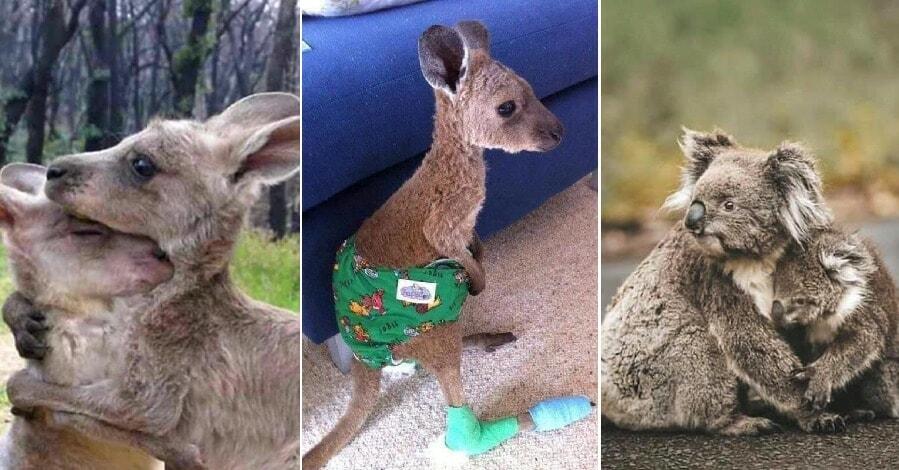 Heartbreaking Photos Show Effects of Australia's Devastating Bushfires on Animals - WORLD OF BUZZ