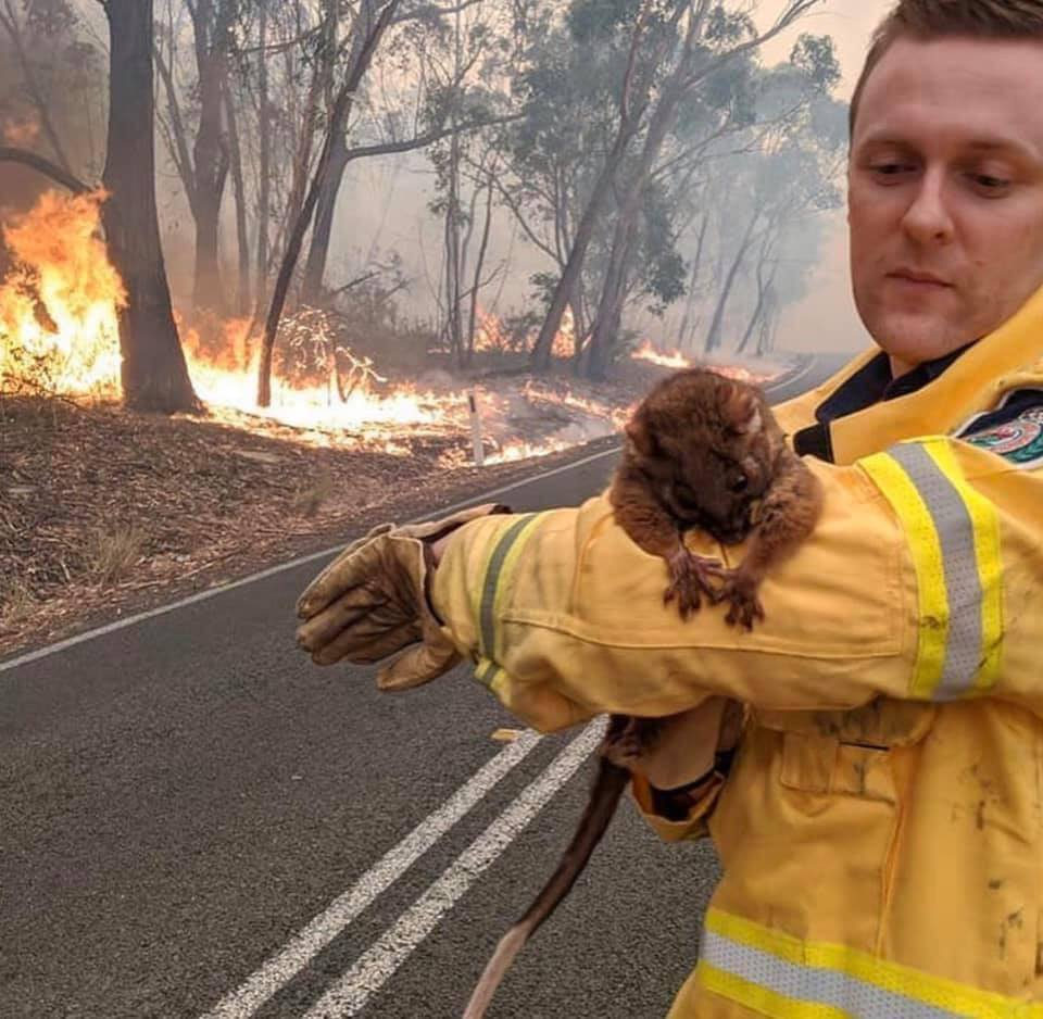 Heartbreaking Photos Show Injured Animals Running Away to Save Themselves From Australia's Massive Bushfires - WORLD OF BUZZ