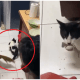 Heroic Cat Helps A Group Terrified Boys Capture A Menacing Rat - WORLD OF BUZZ 6
