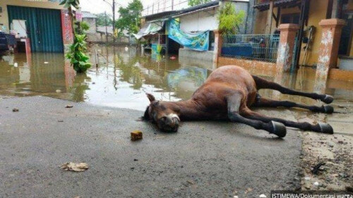 Horse Dies Of Exhaustion After Non-Stop Helping Flood Victims In Jakarta - WORLD OF BUZZ 1