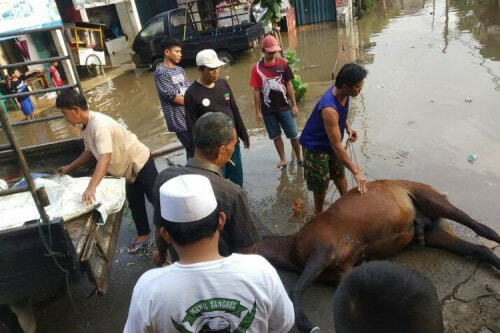 Horse Dies Of Exhaustion After Non-Stop Helping Flood Victims In Jakarta - WORLD OF BUZZ 2