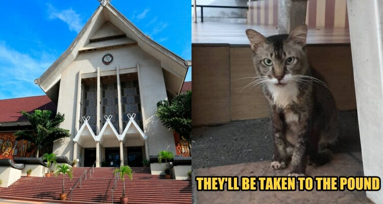 If You Want to Adopt a Cat, The Strays at Muzium Negara are Waiting for You Before They're Taken to the Pound - WORLD OF BUZZ 1