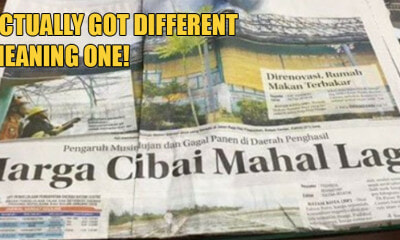 Indo Newspaper Says Prices of Cibai Are Going Up & They Kinda Weren't Joking - WORLD OF BUZZ