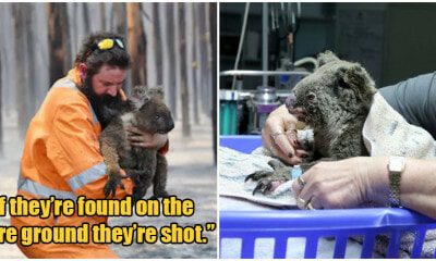 'Kill All Orphaned Baby Kangaroos or Koalas In Bushfires', Aussie Govt Tells First Responders - WORLD OF BUZZ 4
