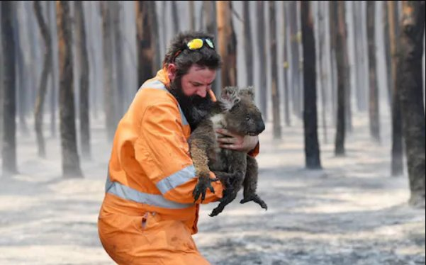 'Kill All Orphaned Baby Kangaroos or Koalas In Bushfires', Aussie Govt Tells First Responders - WORLD OF BUZZ