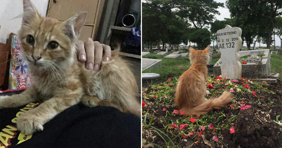 Cat Left Heartbroken & Sick After Owner Passes Away, Immediately Cheers Up After Visit to Grave - WORLD OF BUZZ