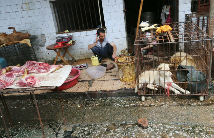 Market Where Wuhan Virus Originated Sold Rats, Wolf Puppies, Koalas & Even Snakes As Meat - WORLD OF BUZZ 3