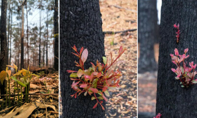 These Photos of New Plants Growing in Australia's Burnt Our FI - WORLD OF BUZZ