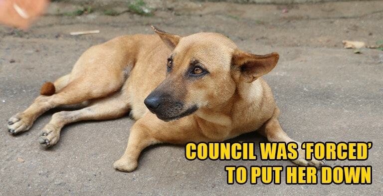 Sabah Authorities Killed Mother Dog Because She Attacked People Who Stole Her Puppies - WORLD OF BUZZ