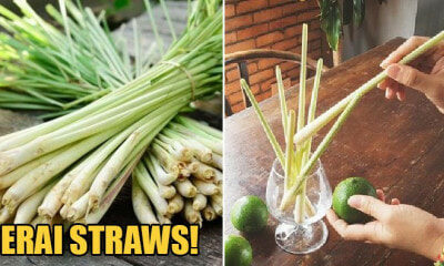 Serai Straws Will Be Introduced In Kelantan To Help Reduce Plastic Wastage - WORLD OF BUZZ 4