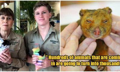 Steve Irwin's Family Have Saved Over 90,000 Animals From Australia's Bush-Fires! - WORLD OF BUZZ