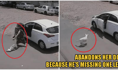 Video: Cruel Woman Throws Handicapped Dog Out of Her Cat & Abandons It - WORLD OF BUZZ