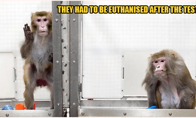 18 Macaques Injected With Coronavirus In Effort To Find Permanent Solution - WORLD OF BUZZ