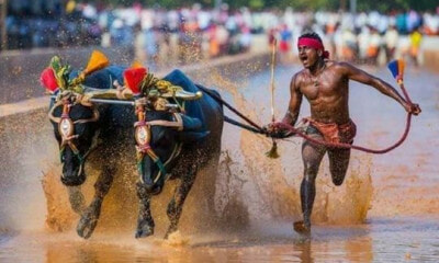 A Kambala Jockey Beat Usain Bolt's 100-metre Olympic World Record - WORLD OF BUZZ