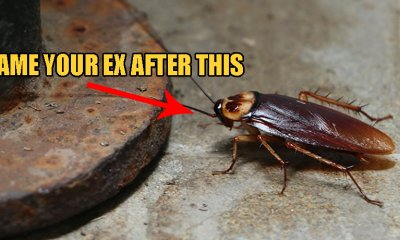 Bitter & Heartbroken? Name A Cockroach After Your Ex And Watch It Get Eaten On Valentine's Day! - World Of Buzz 1