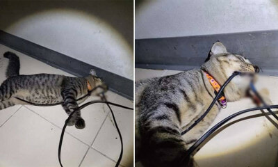 Poor Kitty Found Dead With Electric Wire in Its Teeth, O - WORLD OF BUZZ