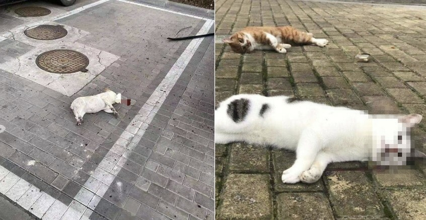 Cats And Dogs Are Thrown Out Of The Apartment After Fake News Of Pet Spreading The Virus - WORLD OF BUZZ 1