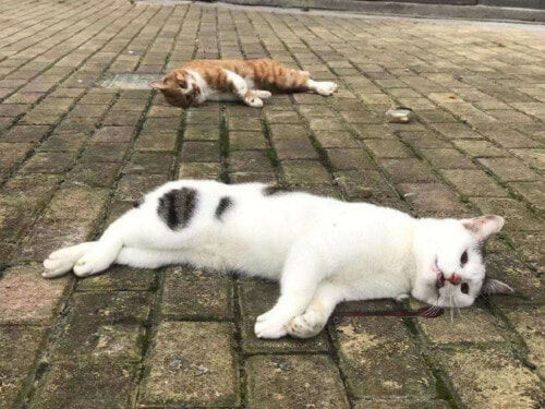 Cats And Dogs Being Thrown Out Of The Apartment After Fake News Of Pet Spreading The Virus - WORLD OF BUZZ 1