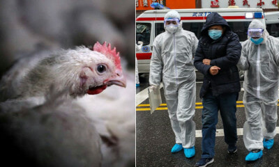 China Confirms New H5N1 Outbreak In Hunan, 4,500 Chickens Dead - WORLD OF BUZZ 3