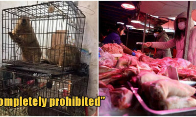 China Officially Places Permanent Ban On Trade & Consumption Of Wild Animals - WORLD OF BUZZ 4
