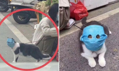 Concerned Owner Protects Pet Cat From Wuhan Virus with Huge Mask, Cuts Out Holes For Its Eyes - WORLD OF BUZZ 4