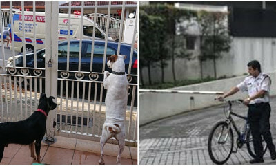 Heroic M'sian Doggos Bark To Get Help For Injured Security Guard That Fell Off His Bike - WORLD OF BUZZ 1