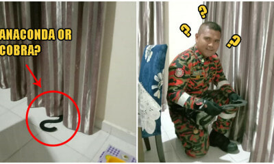 Kelantan Person Freaks Out Finding 'Snake' Hiding In Curtains, Quickly Calls Abang Bomba For Rescue - WORLD OF BUZZ 1