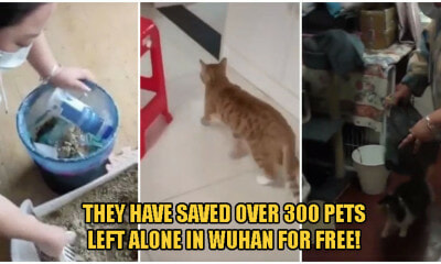 Kind Volunteers Help Pet Owners Stranded Outside Wuhan To Rescue Over 300 Pets Left Alone At Home! - WORLD OF BUZZ
