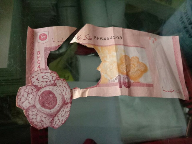 M'sian Father Hilariously Shares How Young Child Cut Out 'flower' From Rm10 Note For Homework - World Of Buzz