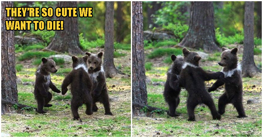 Photos: Photographer Captures Adorable Bear Cubs Dancing Together, Straight Out of A Disney Movie! - WORLD OF BUZZ 5