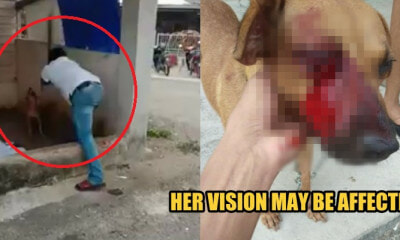 Port Dickson Man Seen Beating a Dog That Was Chained Up, Threatened Person Who Recorded Video - WORLD OF BUZZ