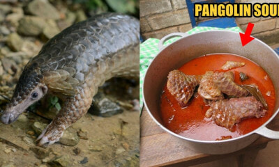 Researchers: Pangolins MAY BE an Intermediate Host of the Novel Coronavirus - WORLD OF BUZZ 4