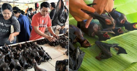 Some Markets In Indonesia Are Still Selling Bat Meat Despite Outbreak of Coronavirus - WORLD OF BUZZ 3