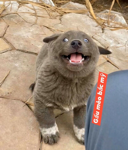 This Adorable Doggo is Taking The Internet by Storm With Its Derpy Faces & We Can't Get Eough! - WORLD OF BUZZ 3