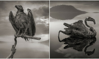 Unsettling Photos Of Calcified Animals Show The Power Of This Salt Lake - World Of Buzz