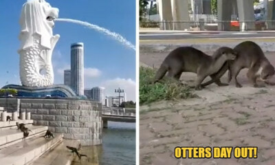 These Otters Have A Field Day O - World Of Buzz