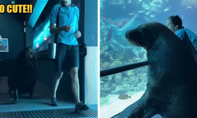 WATCH: Birri Junior The Sea Lion Go On An Adventure At Sea World Australia - WORLD OF BUZZ