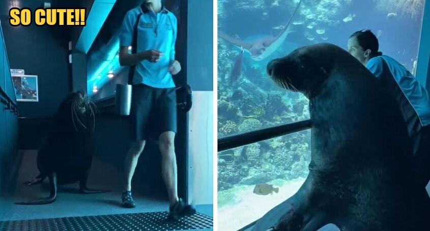 WATCH: Birri Junior The Sea Lion Go On An Adventure At Sea World Australia - WORLD OF BUZZ