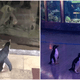 Covid-19 Lockdown Closes Aquarium, Penguins Free To Roam & Experience Being A Visitor - WORLD OF BUZZ