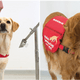 Dogs Could Be Used To Detect Covid 19 After Just Six Weeks Of Training - WORLD OF BUZZ 2
