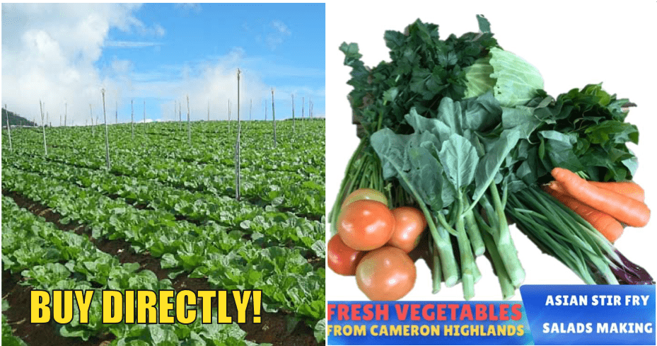 From 30 March, You Can Buy Cameron Highland Vegetables Through Lazada - WORLD OF BUZZ 3