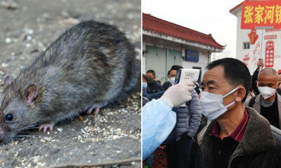 Man From China Dies From Hantavirus - WORLD OF BUZZ