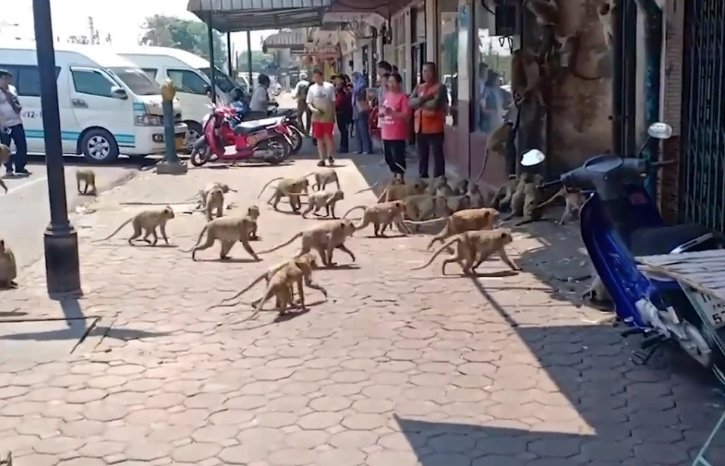 HUNDREDS Of Starving Monkeys Raid Thai Town After Covid-19 Drives Tourists Who Feed Them Away - WORLD OF BUZZ 1