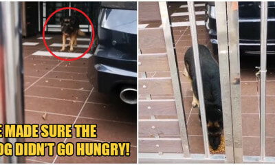 Kind Malay Man Helps Feed Neighbour's Dog In Johor As It's Owner Remains Stuck In Singapore - WORLD OF BUZZ