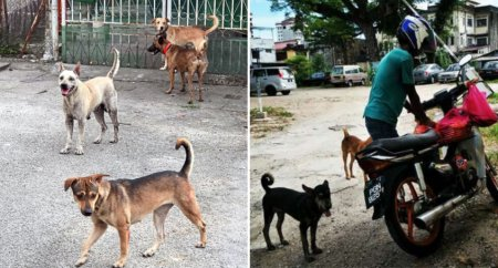 Mco: Animal Shelters And Community Feeders Animals Are Facing Difficulties In Feeding Stray Animals Amidst Mco Implementation - World Of Buzz