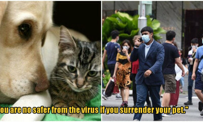 S'pore Pet Owners Considered Giving Up Their Pets Due To Covid-19 Fears - WORLD OF BUZZ
